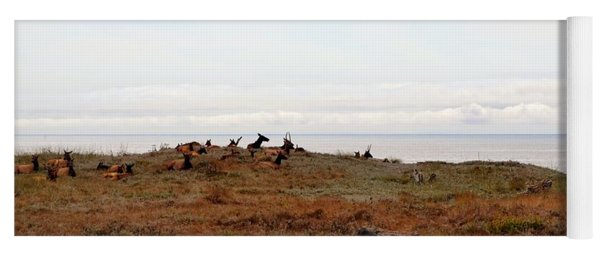 Roosevelt Elk And The Ocean Yoga Mat
