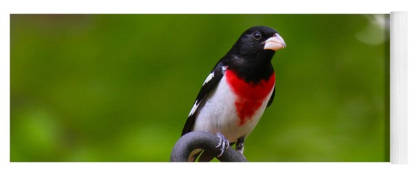 Yoga Mat featuring the photograph Rose Breasted Grosbeak by Robert L Jackson