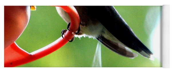 Ruby-throated Hummingbird Pooping Yoga Mat