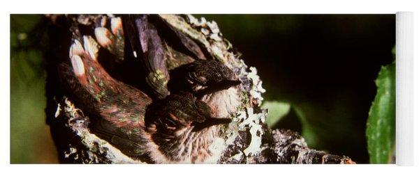 Rufous Hummingbirds In Nest Yoga Mat
