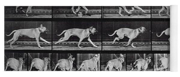 Running Dog Yoga Mat