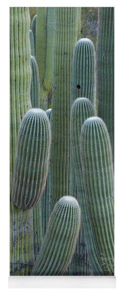 Saguaro Cacti, Oro Valley, Arizona, Usa Yoga Mat