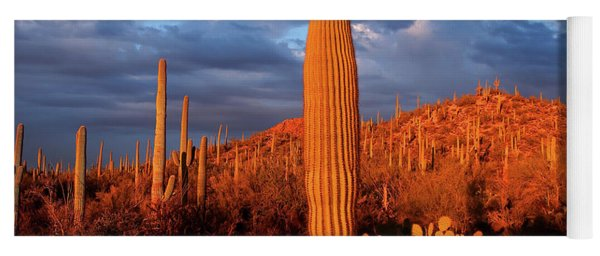Saguaro Cactus At Saguaro National Yoga Mat