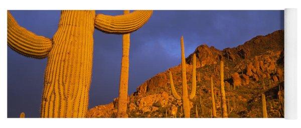 Saguaro Cactus, Tucson, Arizona, Usa Yoga Mat