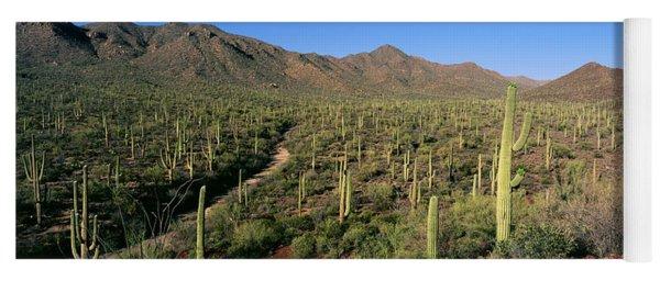 Saguaro National Park, Arizona, Usa Yoga Mat