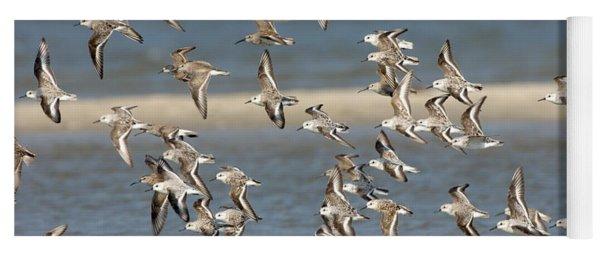 Sanderlings And Dunlins In Flight Yoga Mat
