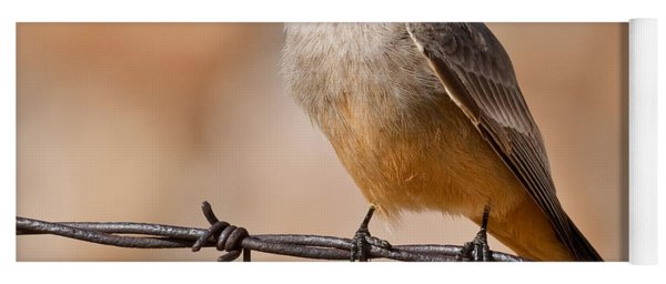 Say's Phoebe On A Barbed Wire Yoga Mat