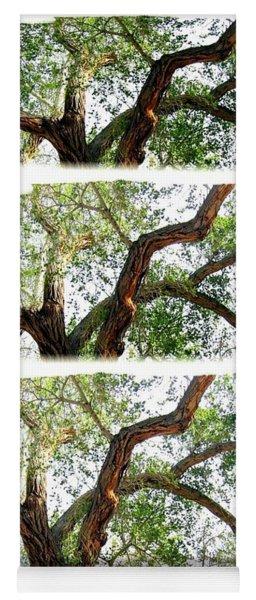 Scotty's Castle Oak Tree Yoga Mat