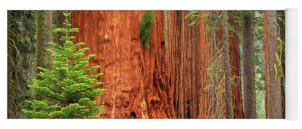 Sequoias Yoga Mat