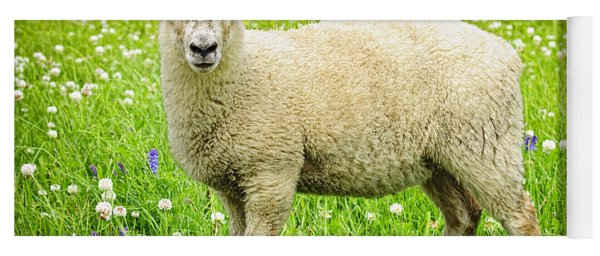 Sheep In Summer Meadow Yoga Mat
