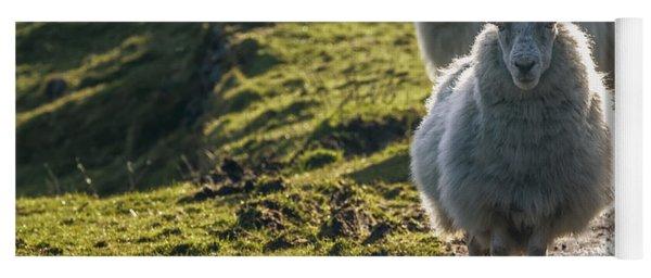 Sheep Walking On Path Ballinskelligs Yoga Mat