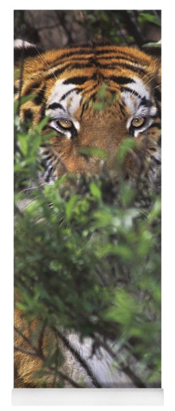Yoga Mat featuring the photograph Siberian Tiger In Hiding Wildlife Rescue by Dave Welling
