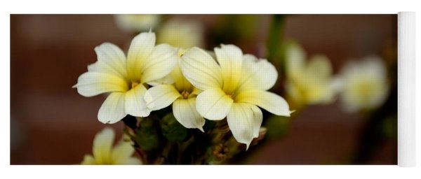 Sisyrinchium Striatum Yoga Mat