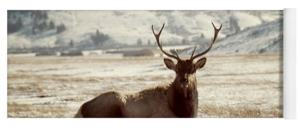 Sitting Bull Elk Yoga Mat
