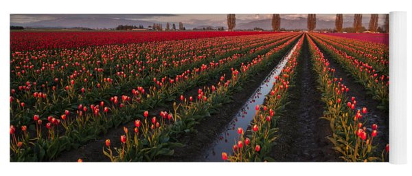 Skagit Tulip Fields Panorama Yoga Mat