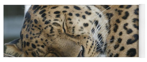 Sleeping Leopard Yoga Mat