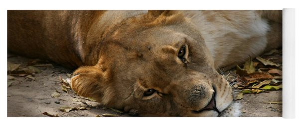 Sleepy Lioness Yoga Mat