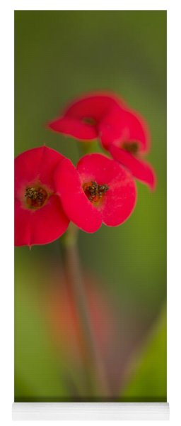 Small Red Flowers With Blurry Background Yoga Mat