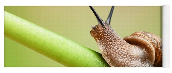 Snail On Green Stem Yoga Mat
