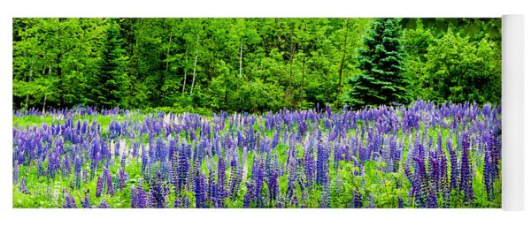 Sneaking Up On Lupines Yoga Mat