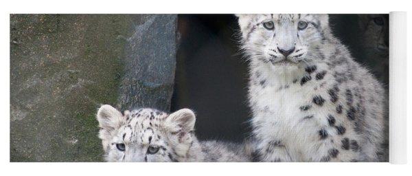 Snow Leopard Cubs Yoga Mat