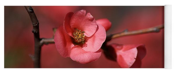 Spring Richness - Flowering Quince Yoga Mat