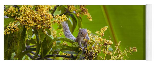 Squirrel In A Tree Yoga Mat