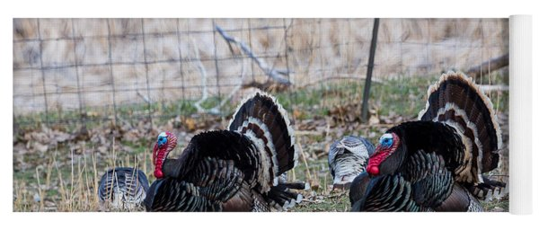 Strutting Turkeys Yoga Mat