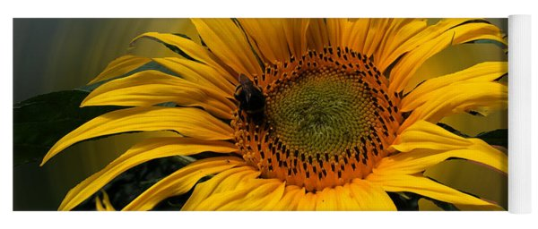Yoga Mat featuring the photograph Sun Flower Summer 2014 by Colette V Hera  Guggenheim