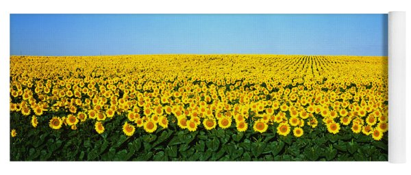 Sunflower Field, North Dakota, Usa Yoga Mat