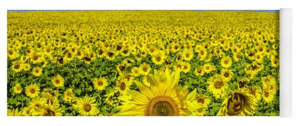 Sunflower Field Yoga Mat