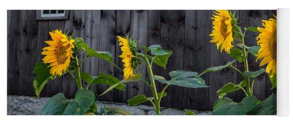 Sunflower Quartet Yoga Mat