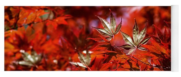 Sunlit Japanese Maple Yoga Mat