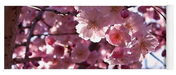 Sunlit Cherry Blossoms Yoga Mat