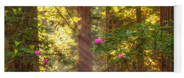Sunrays Over Redwoods Yoga Mat