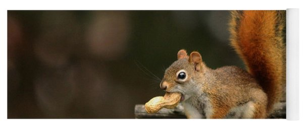 Surprised Red Squirrel With Nut Portrait Yoga Mat