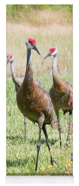 Sweet Sandhill Crane Family Yoga Mat