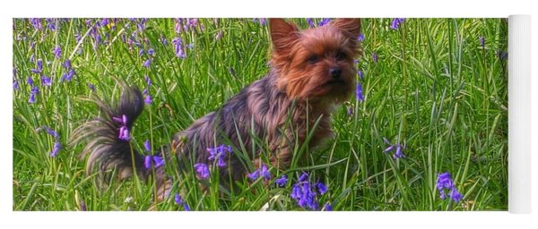 Teddy Amongst The Bluebells Yoga Mat