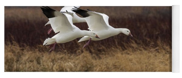 Texas Snow Geese Yoga Mat