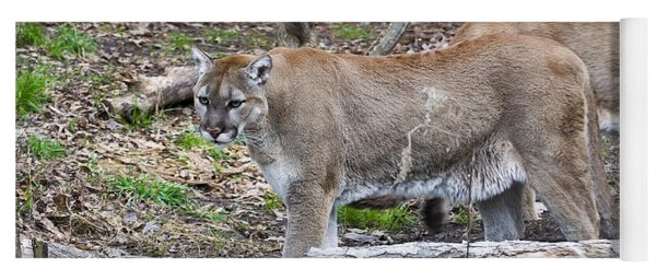 The Cougar Look Yoga Mat