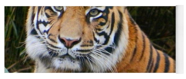 The Eyes Of A Sumatran Tiger Yoga Mat