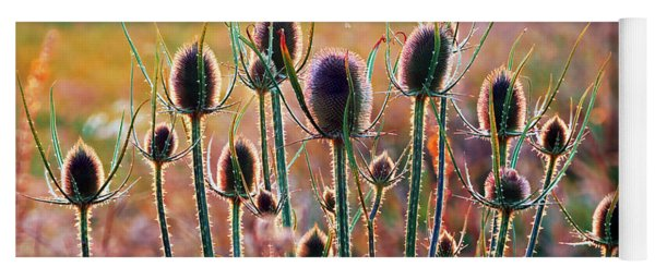 Thistles With Sunset Light Yoga Mat