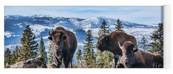 Yoga Mat featuring the photograph Three Bison by Gary Beeler