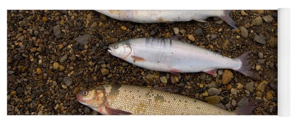 Three Different Types Of Arctic Fish Yoga Mat