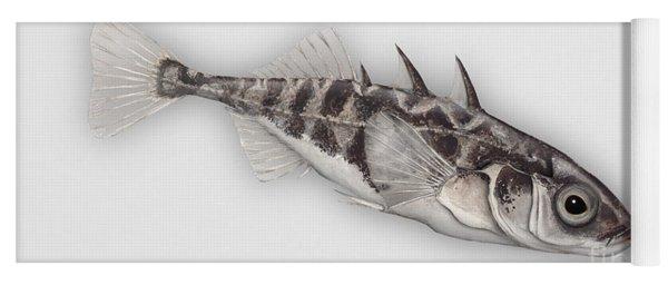 Three-spined Stickleback Gasterosteus Aculeatus - Stichling - L'epinoche - Espinoso - Kolmipiikki Yoga Mat