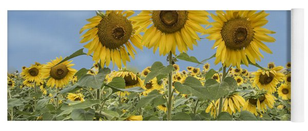 Three Sunflowers At The Front Of A Sunflower Field Yoga Mat