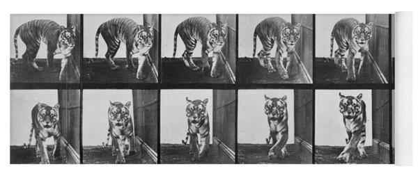 Tiger Pacing Yoga Mat