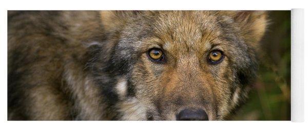 Timber Wolf In Denali Yoga Mat