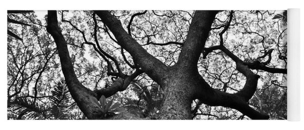 Tree Branches Looking Up Yoga Mat