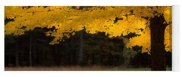 Tree Canopy Glowing In The Morning Sun Yoga Mat